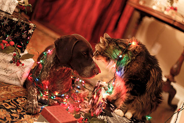 peace an weihnachten - katze weihnachten stock-fotos und bilder