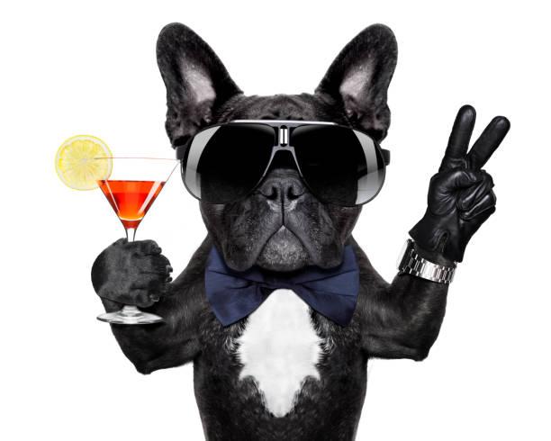 Peace cocktail dog picture id1023361442?b=1&k=6&m=1023361442&s=612x612&w=0&h=jqsqqoc11dw7jdolx42kckegq8r7fszr 8jsrumgfes=