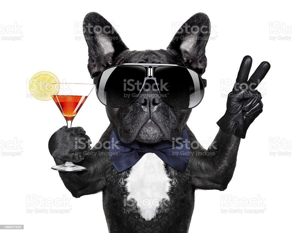 Paix cocktail chien - Photo