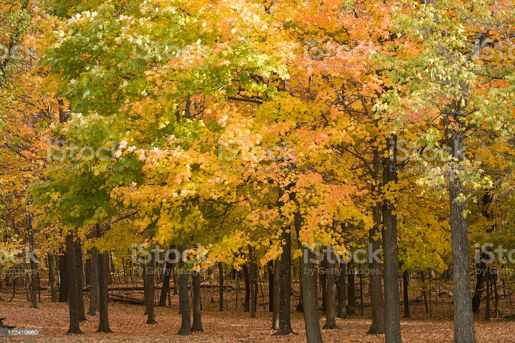 Peaceful Autumn Day at the park stock photo
