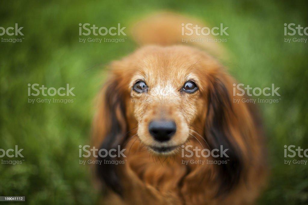 Peaceful Companion stock photo