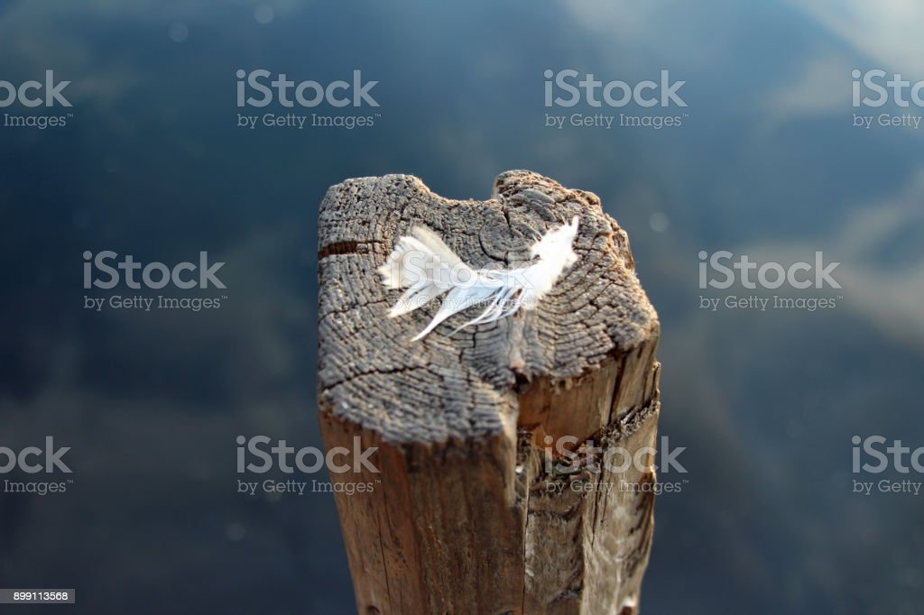 Peaceful feather on the wooden stick stand in the water stock photo