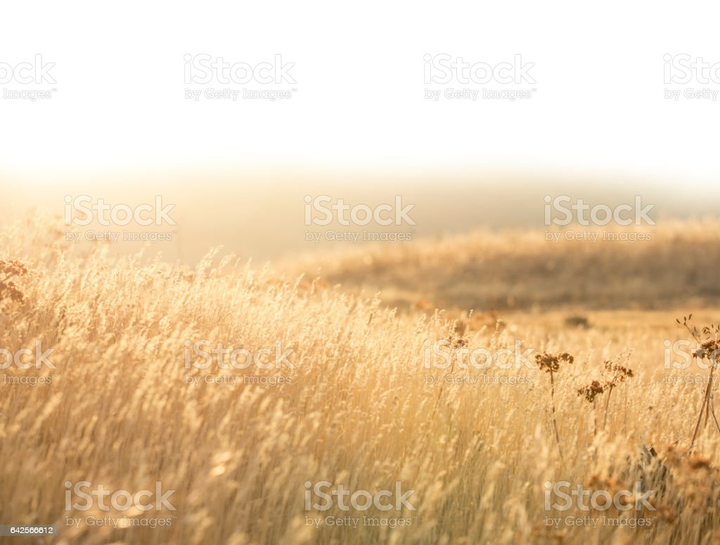 Peaceful Golden Hills stock photo