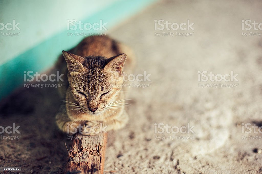peaceful gray cat sleeping relaxing on a stick stock photo more