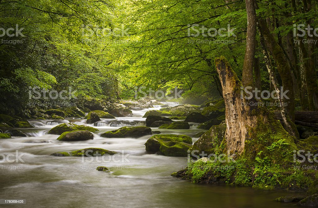 Peaceful Great Smoky Mountains National Park Foggy Tremont River stock photo