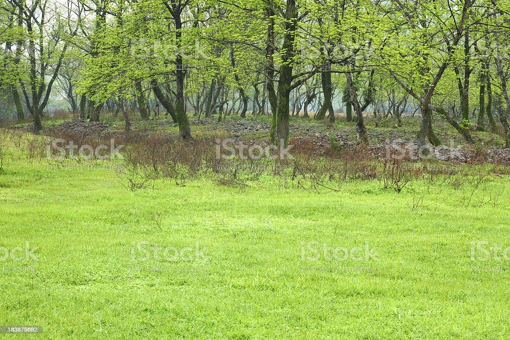Peaceful Green Garden royalty-free stock photo