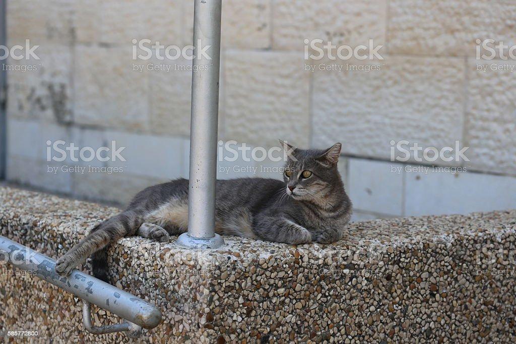 Peaceful Grey Cat Focused on Something stock photo
