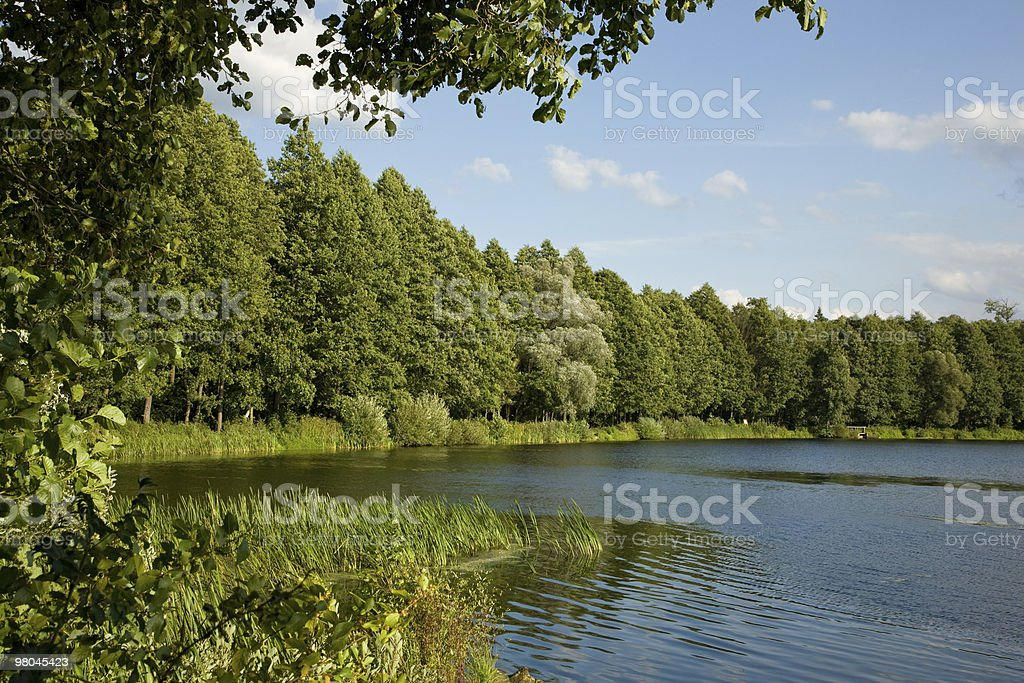 Peaceful lake inside forest royalty-free stock photo