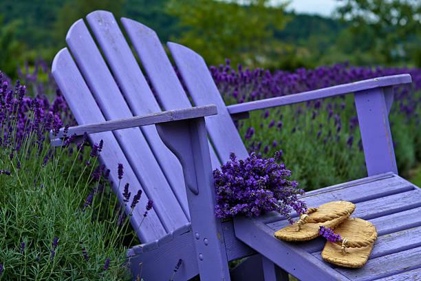 Peaceful Lavender stock photo