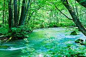 日本の静かな渓流シーン