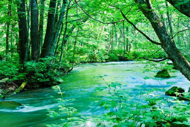 日本の静かな渓流シーン ストックフォト