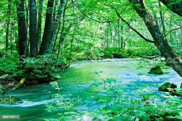 Photo of Peaceful Mountain Stream Scene in Japan