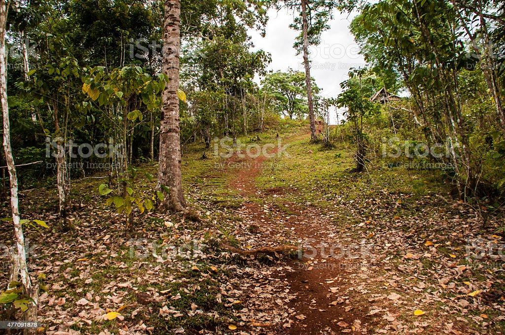 Peaceful Nature stock photo