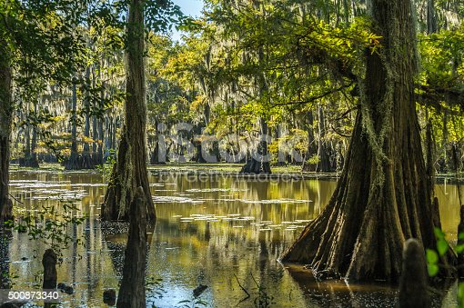 Swamp in the morning light is silent place of peace.