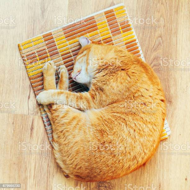 Peaceful orange red tabby cat male kitten sleeping in his bed on picture id679955230?b=1&k=6&m=679955230&s=612x612&h=xdemfjey83twhtvbypfvusdlfujjtdmfhgqzkh eh c=