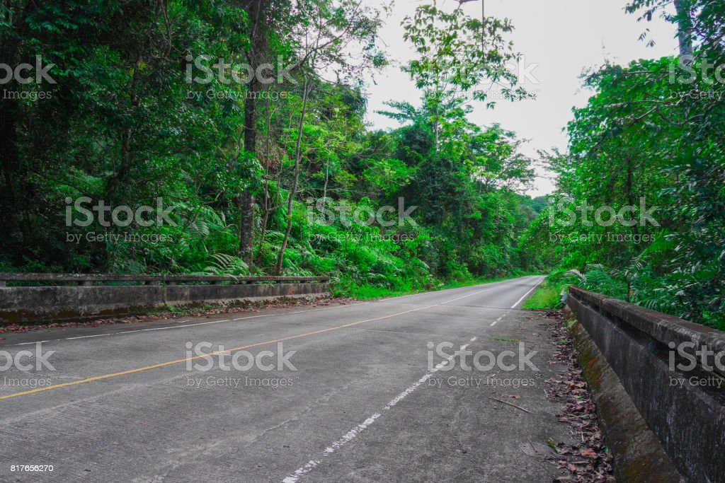Peaceful road and forest on two side along the way stock photo
