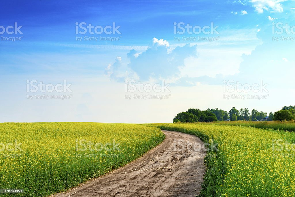 Peaceful rural landscape in wide field royalty-free stock photo