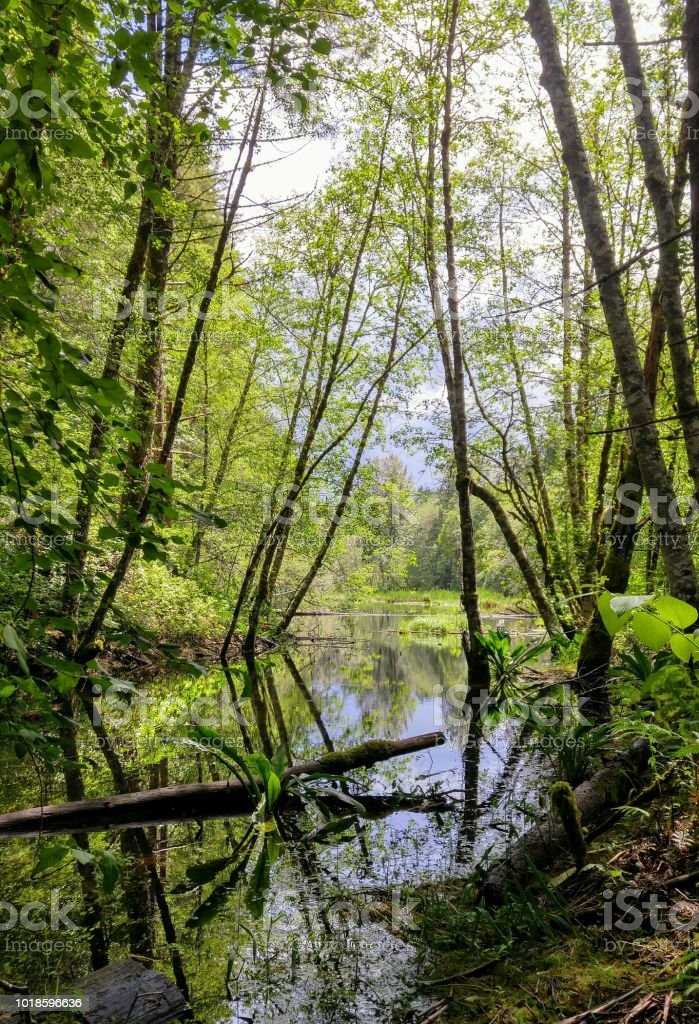 A peaceful scene of trees reflecting on a calm pond stock photo