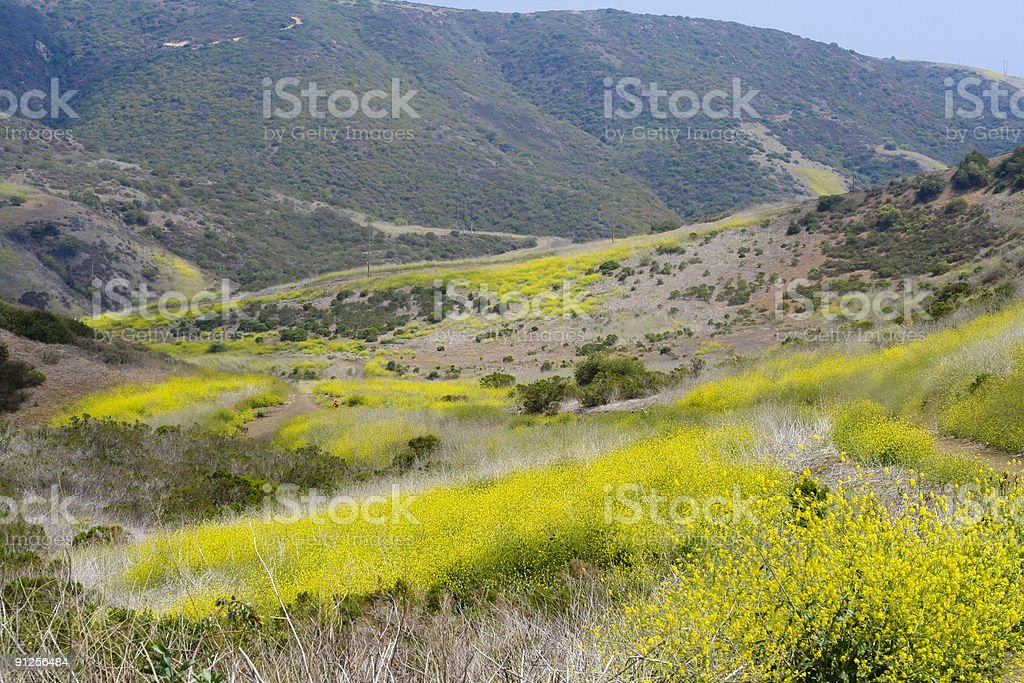 Peaceful Valley stock photo