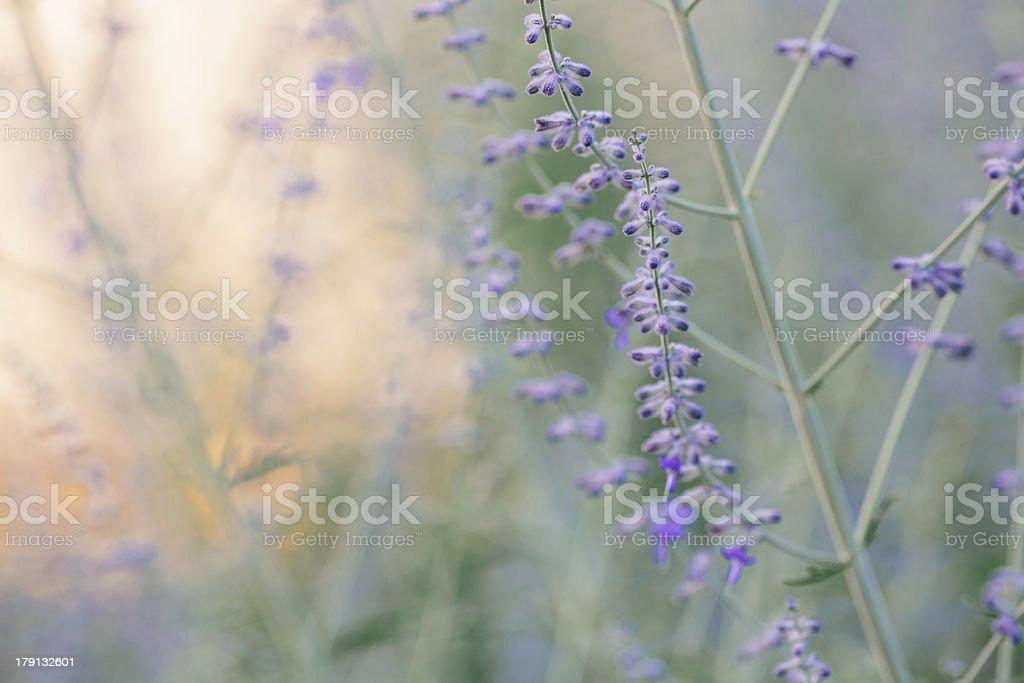 Peaceful Wild Flower Scene royalty-free stock photo