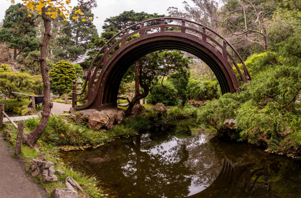 Peacefull picture of Japanese Tea Garden with a bridge over small river and ginkgo tree. Golden Gate Park, San Francisco. stock photo