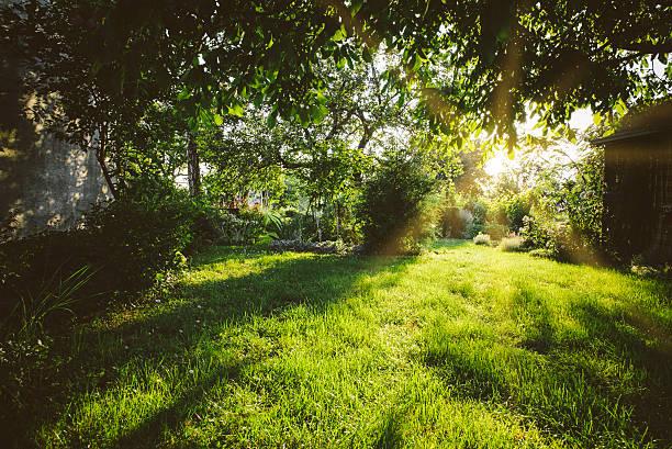 ruhigen, grünen garten - der geheime garten stock-fotos und bilder