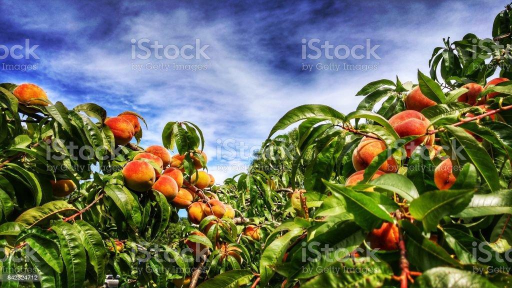 Peach and blue sky stock photo