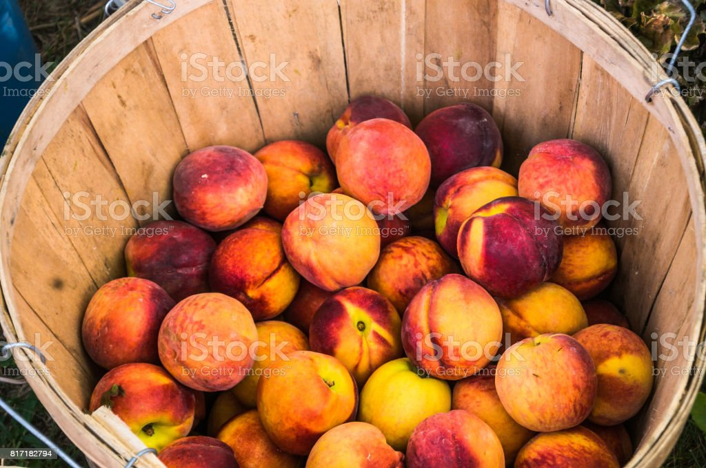 Peach Basket - foto stock