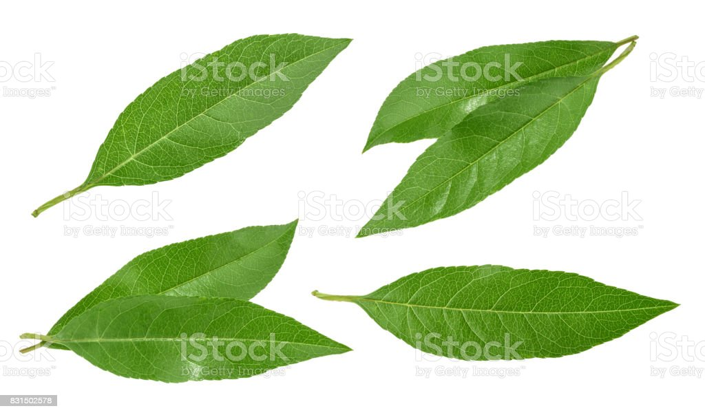 Peach leaves isolated on white without shadow. set stock photo