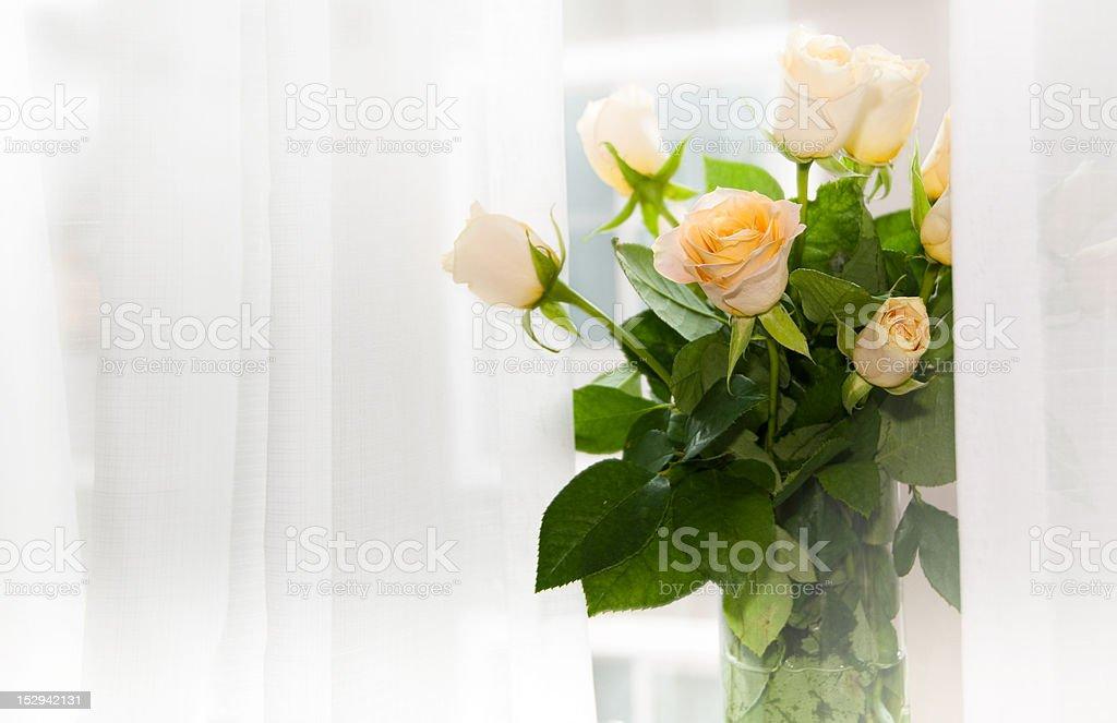 Peach Rosebuds against a White Gauze Curtain 1 royalty-free stock photo