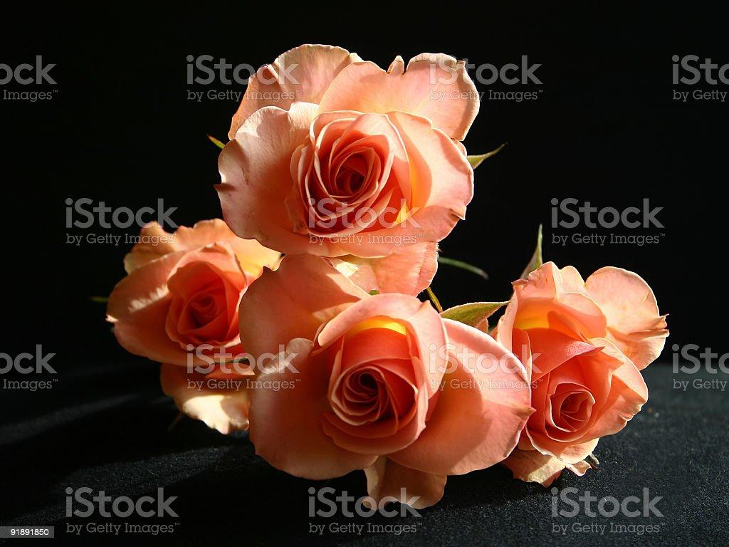 Peach Roses stock photo