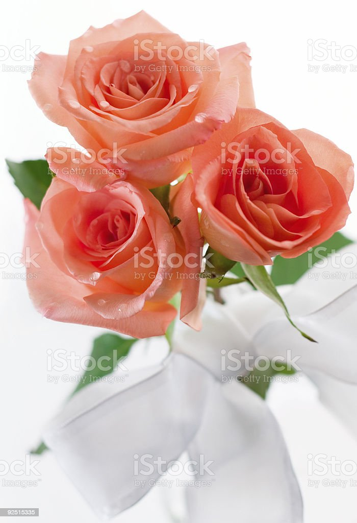Peach Roses stock photo