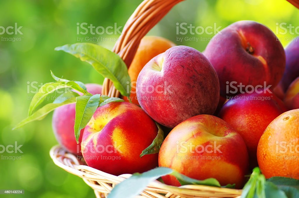 peaches and nectarines in basket stock photo
