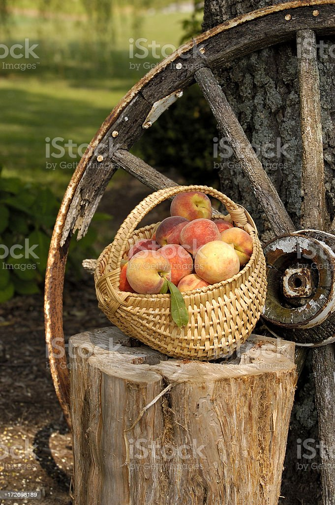Peaches from the Farm royalty-free stock photo
