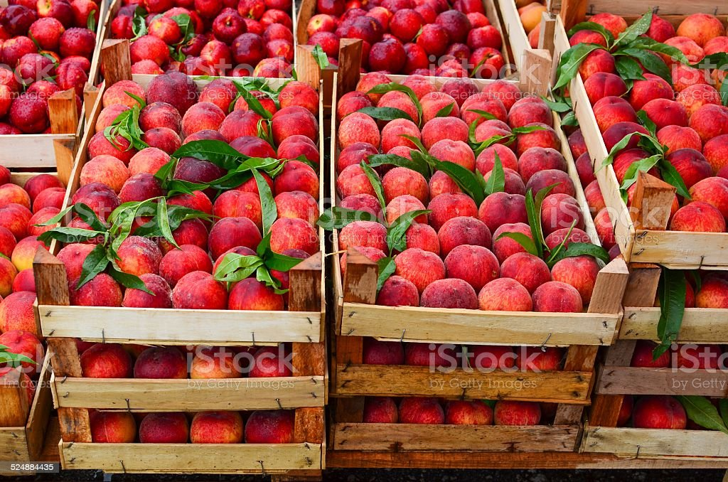 Peaches in crates stock photo