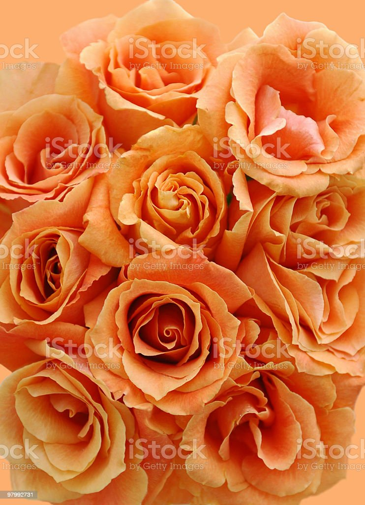 Peachy coral rose bouquet royalty free stockfoto