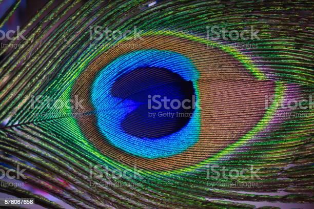 Peacock 01 picture id878067656?b=1&k=6&m=878067656&s=612x612&h=e3kqfgksqyegl8w8qsd5nexugau25l27jqivno2sp4g=