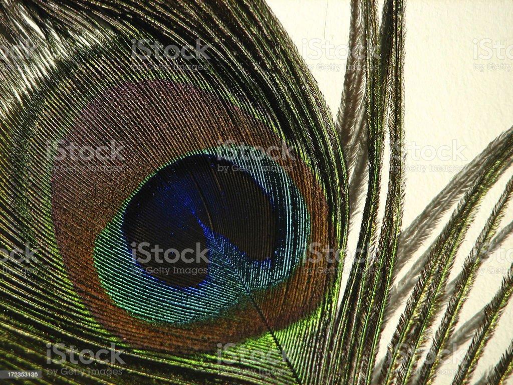 Primer plano de plumas de pavo foto de stock libre de derechos