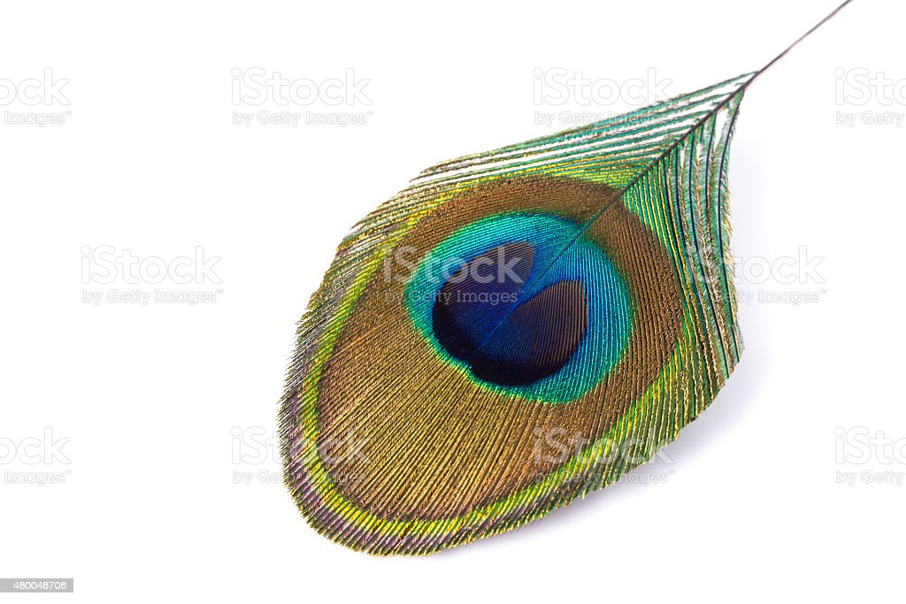 peacock feather isolated on a white. stock photo