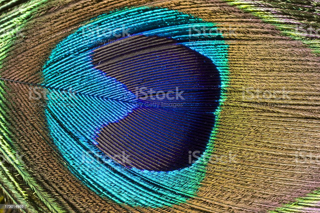 Peacock Feather, Pattern, Repetition, Close-Up, Bird, Plumage, Iridescent, Background royalty-free stock photo