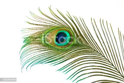 Beautiful peacock feather isolated on white