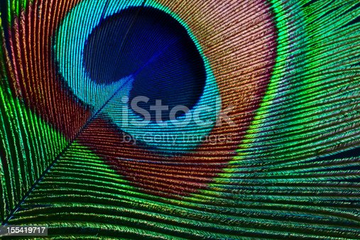 istock Peacock feather 155419717