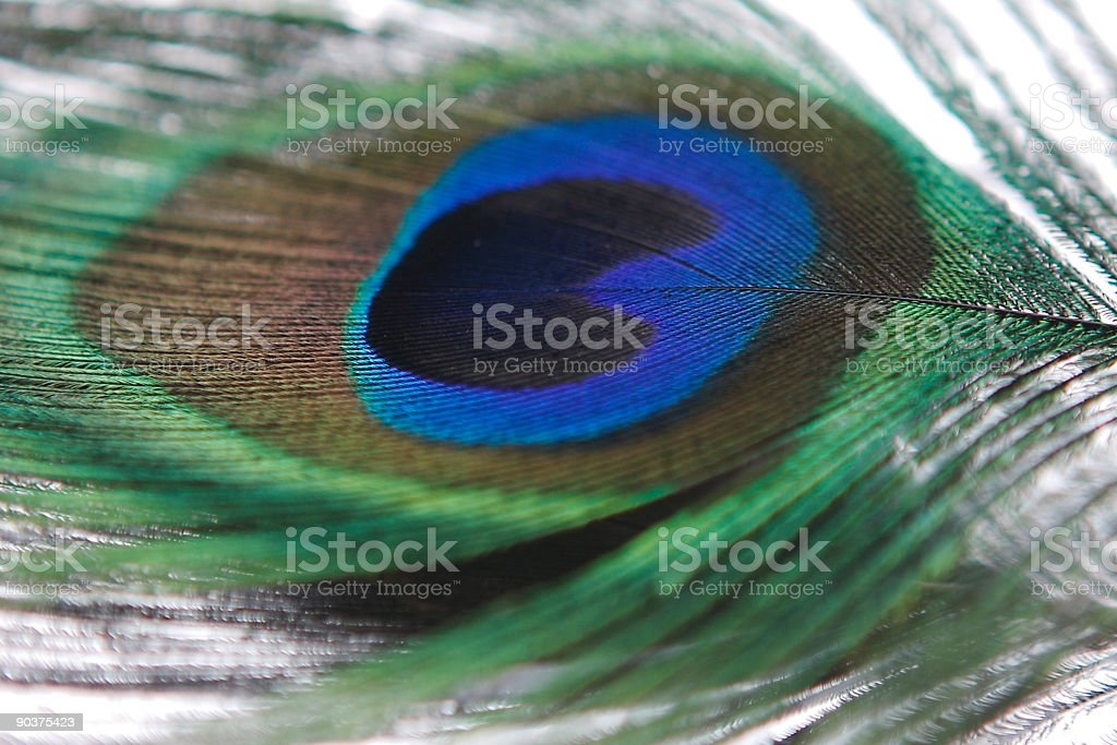 Peacock feather stock photo