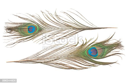 Peacock Feathers Isolated On White Stock Photo & More Pictures of Animal Markings