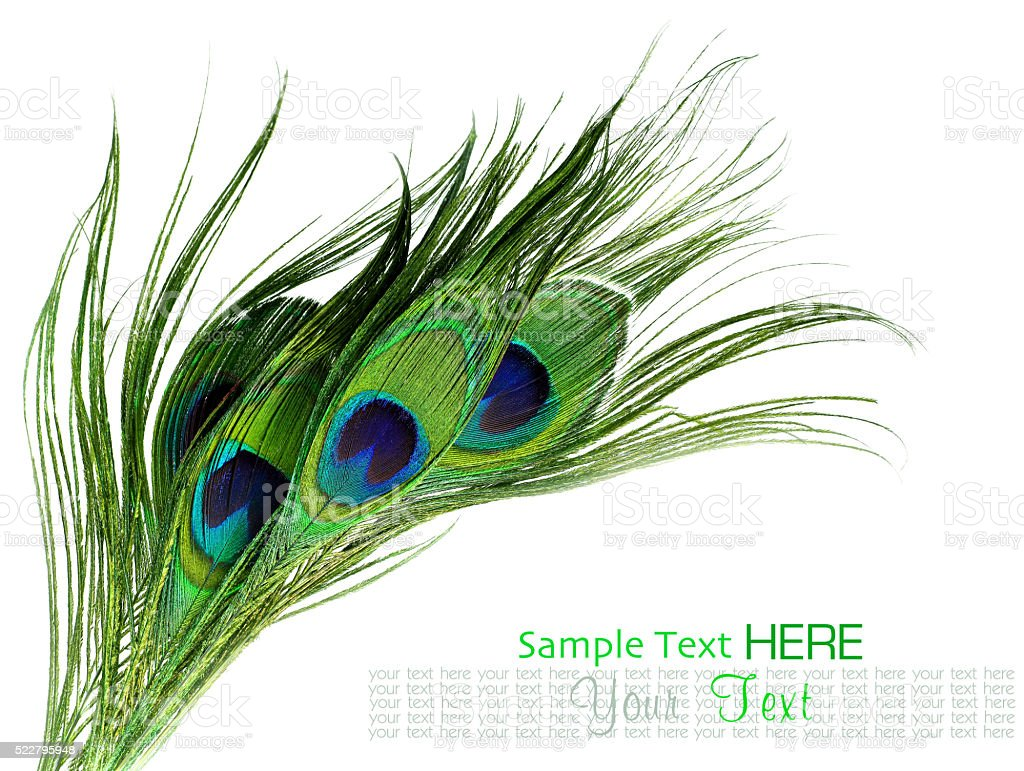 Peacock feathers on white background stock photo
