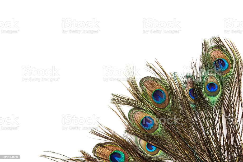 Peacock feathers on white background. stock photo