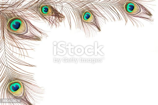 istock Peacock feathers 890423676