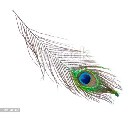 Stock photo of peacock plume isolated on white. Close-up shot.
