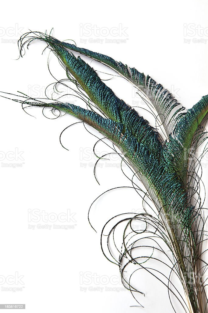 Peacock Swords royalty-free stock photo