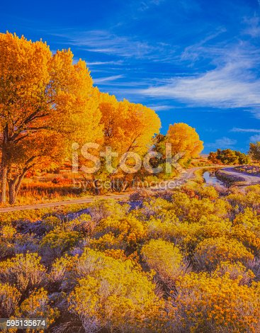 Brilliant Colors Of Autumn Cottonwood Trees Line The Owens Valley At Bishop California